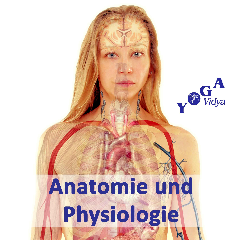 Anatomie Und Physiologie – Naturheilkunde (podcast)